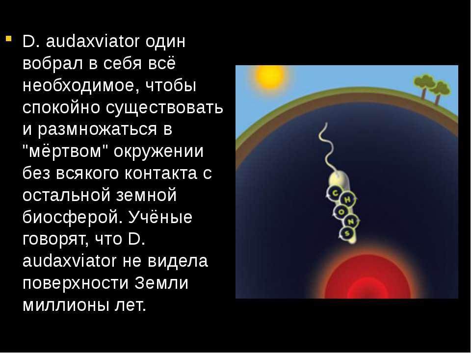 D. audaxviator один вобрал в себя всё необходимое, чтобы спокойно существоват...