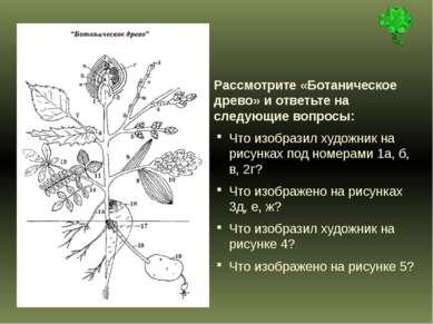 Рассмотрите «Ботаническое древо» и ответьте на следующие вопросы: Что изобраз...