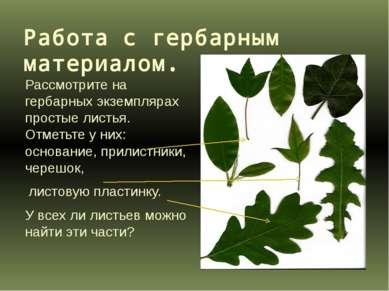 Работа с гербарным материалом. Рассмотрите на гербарных экземплярах простые л...