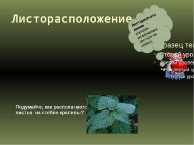 Листорасположение. Листорасположение – порядок размещения листьев на побеге. ...