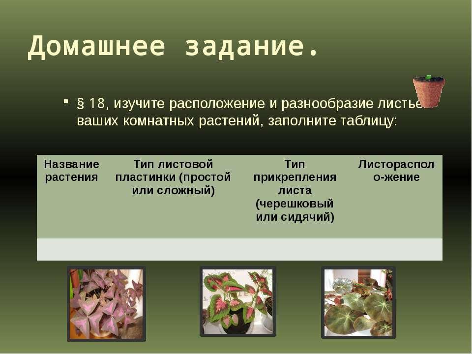 Домашнее задание. § 18, изучите расположение и разнообразие листьев ваших ком...