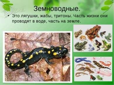 Земноводные. Это лягушки, жабы, тритоны. Часть жизни они проводят в воде, час...