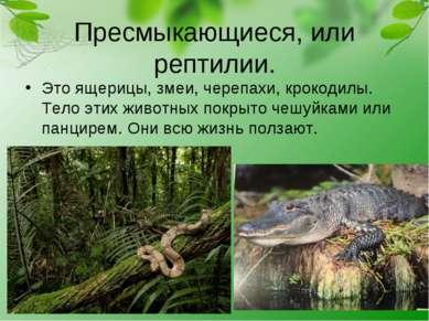Пресмыкающиеся, или рептилии. Это ящерицы, змеи, черепахи, крокодилы. Тело эт...
