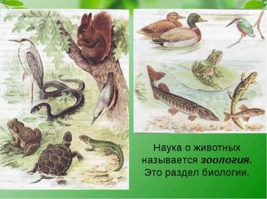 Наука о животных называется зоология. Это раздел биологии.