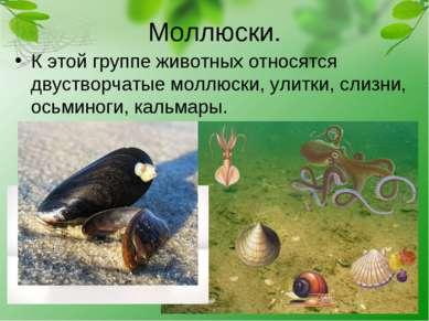 Моллюски. К этой группе животных относятся двустворчатые моллюски, улитки, сл...
