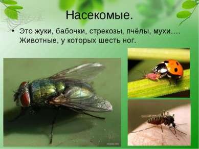 Насекомые. Это жуки, бабочки, стрекозы, пчёлы, мухи…. Животные, у которых шес...
