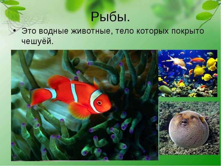 Рыбы. Это водные животные, тело которых покрыто чешуёй.