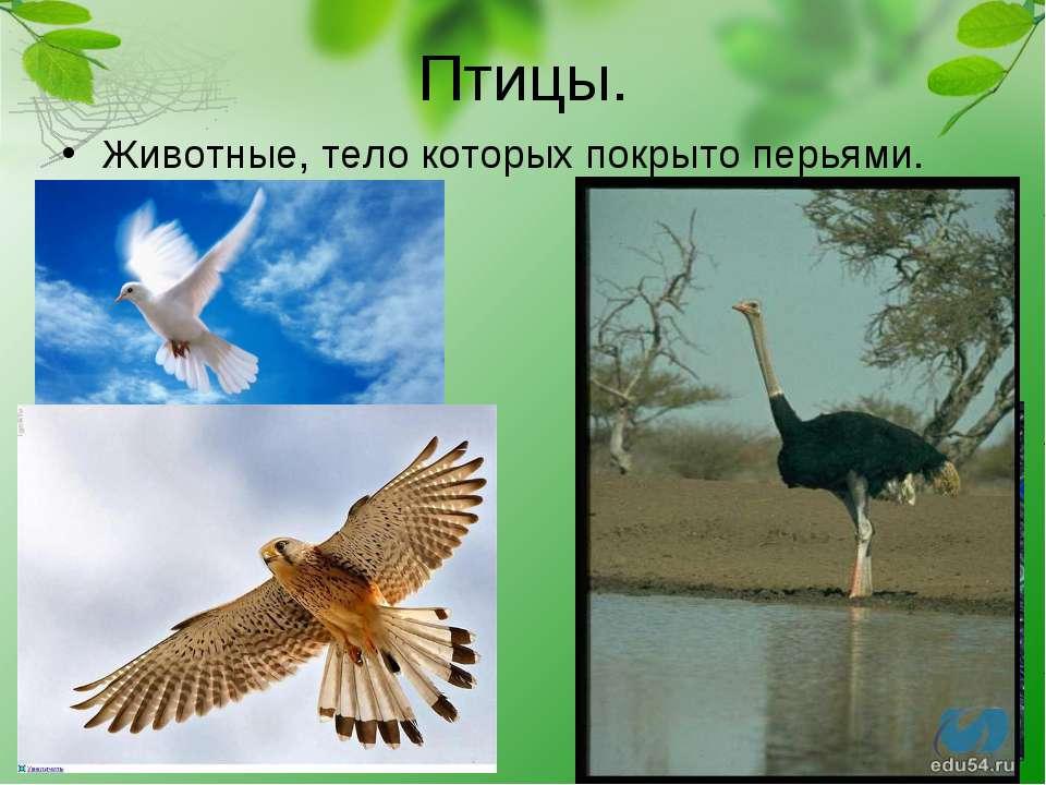 Птицы. Животные, тело которых покрыто перьями.
