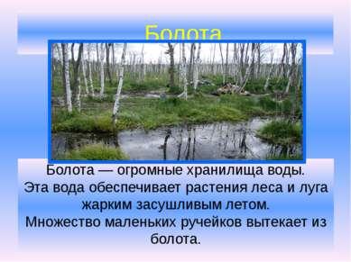 Болота Болота— огромные хранилища воды. Эта вода обеспечивает растения леса ...