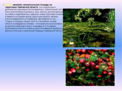 Болота занимают незначительную площадь на территории Тамбовской области.Они ...