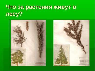 Что за растения живут в лесу?