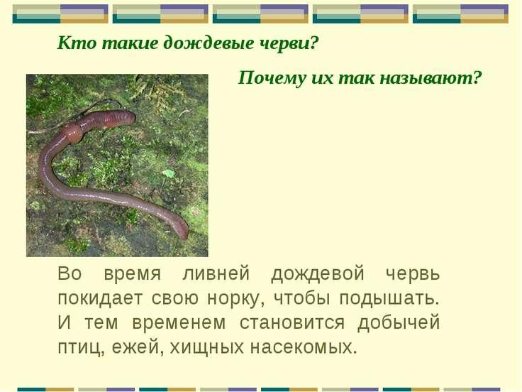 Во время ливней дождевой червь покидает свою норку, чтобы подышать. И тем вре...
