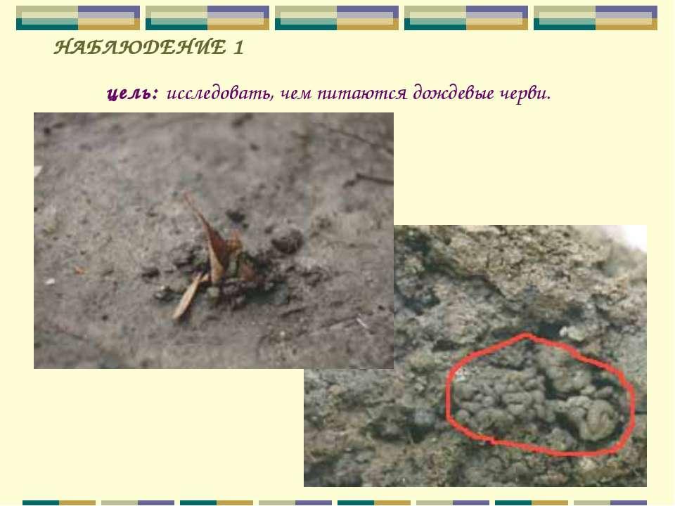 цель: исследовать, чем питаются дождевые черви. НАБЛЮДЕНИЕ 1