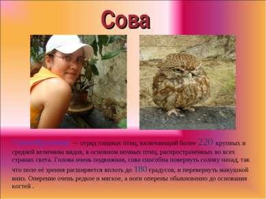 Сова Совообразные — отряд хищных птиц, включающий более 220 крупных и средней...