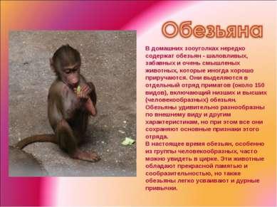 В домашних зооуголках нередко содержат обезьян - шаловливых, забавных и очень...