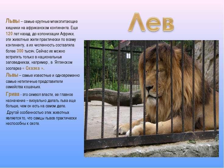 Львы – самые крупные млекопитающие хищники на африканском континенте. Еще 120...