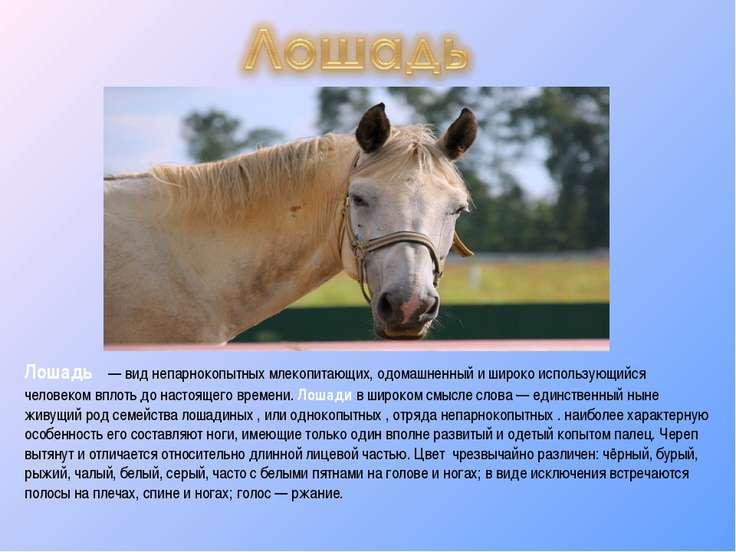 Лошадь — вид непарнокопытных млекопитающих, одомашненный и широко использующ...