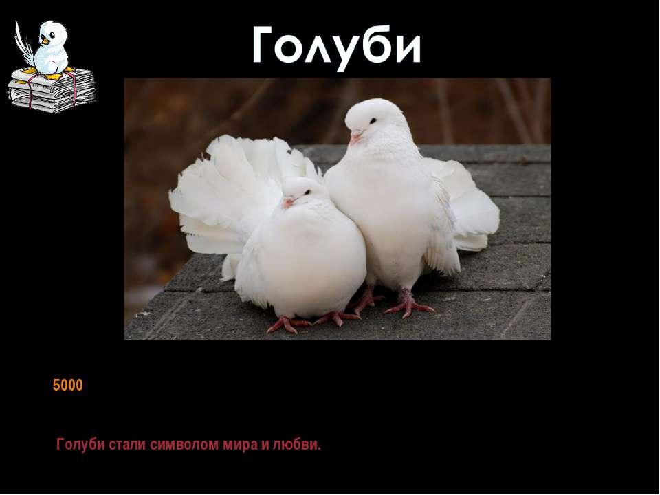 В течении тысячелетий человек неизменно сохраняет любовь к голубю. Более 5000...