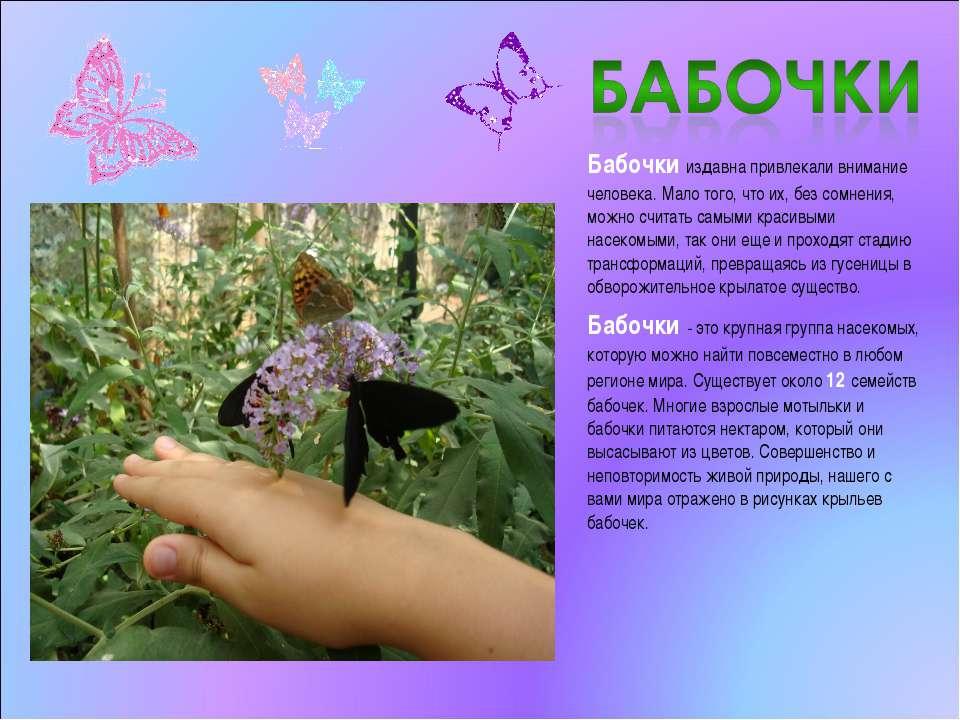 Бабочки издавна привлекали внимание человека. Мало того, что их, без сомнения...
