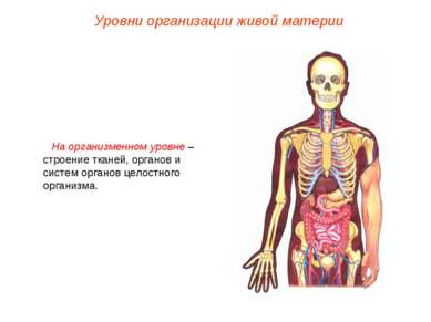 На организменном уровне – строение тканей, органов и систем органов целостног...