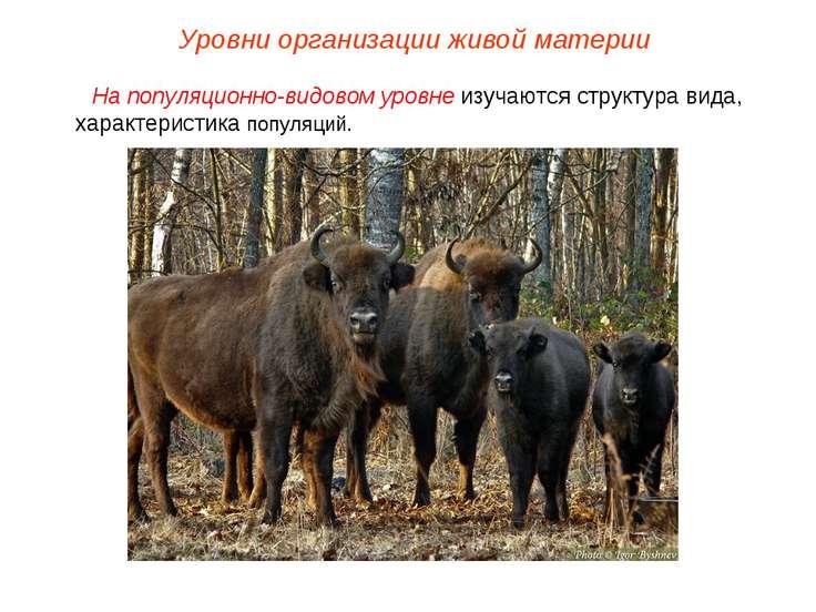На популяционно-видовом уровне изучаются структура вида, характеристика попул...