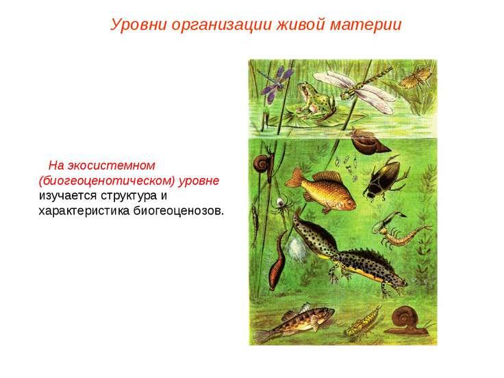 На экосистемном (биогеоценотическом) уровне изучается структура и характерист...