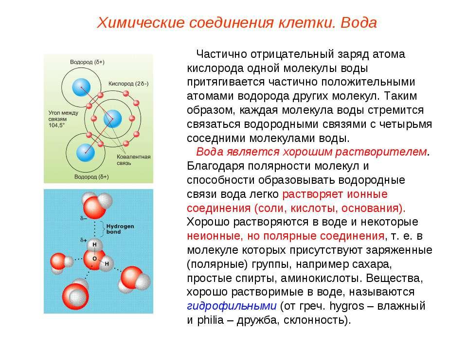 Частично отрицательный заряд атома кислорода одной молекулы воды притягиваетс...