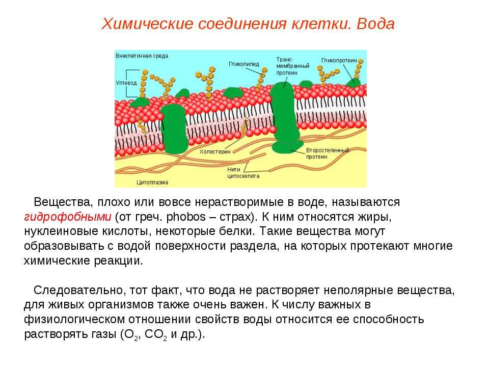Вещества, плохо или вовсе нерастворимые в воде, называются гидрофобными (от г...
