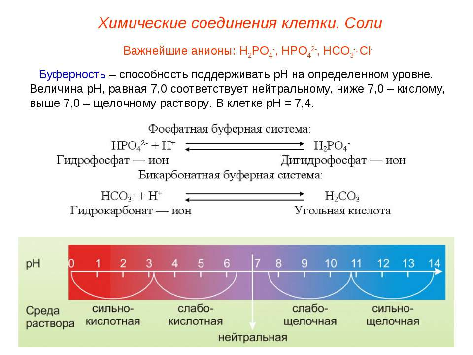 Важнейшие анионы: Н2РО4-, НРО42-, НСО3-, Сl- Буферность – способность поддерж...