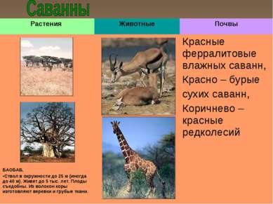 Растения Животные Почвы Красные ферралитовые влажных саванн, Красно – бурые с...