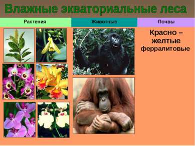Растения Животные Почвы Красно – желтые ферралитовые