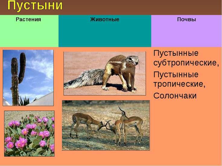Растения Животные Почвы Пустынные субтропические, Пустынные тропические, Соло...