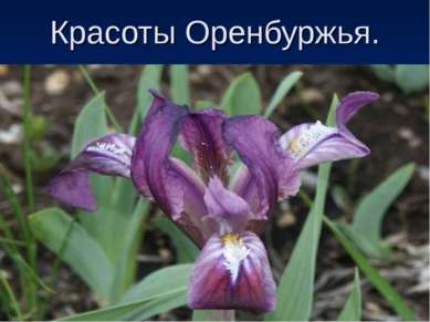Красоты Оренбуржья.