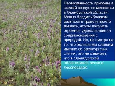 Первозданность природы и свежий воздух не меняются в Оренбургской области. Мо...