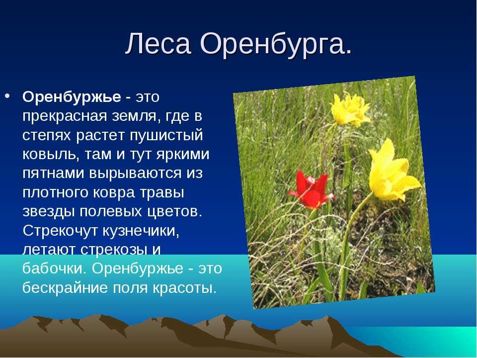 Леса Оренбурга. Оренбуржье - это прекрасная земля, где в степях растет пушист...