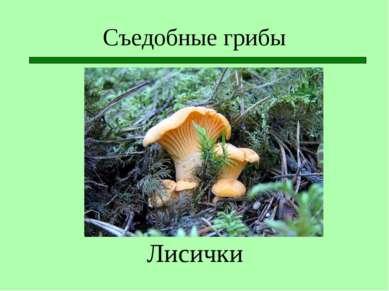 Съедобные грибы Лисички