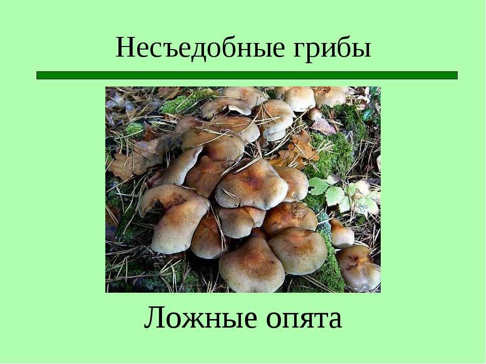 Несъедобные грибы Ложные опята