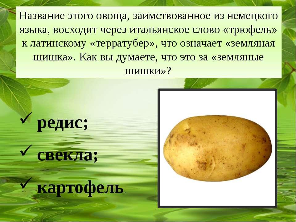 Название этого овоща, заимствованное из немецкого языка, восходит через италь...