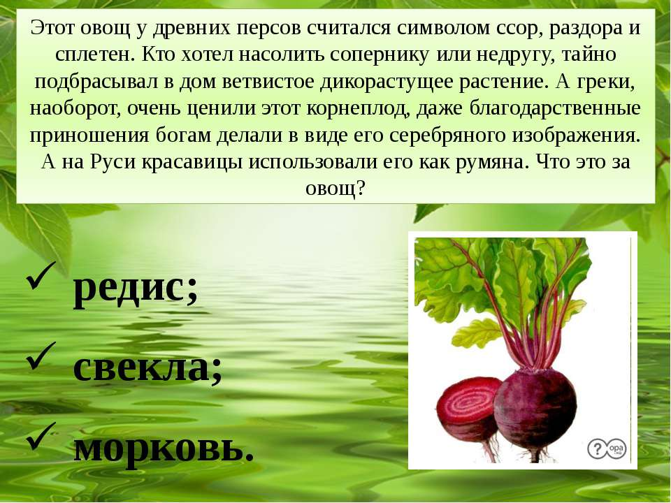Этот овощ у древних персов считался символом ссор, раздора и сплетен. Кто хот...