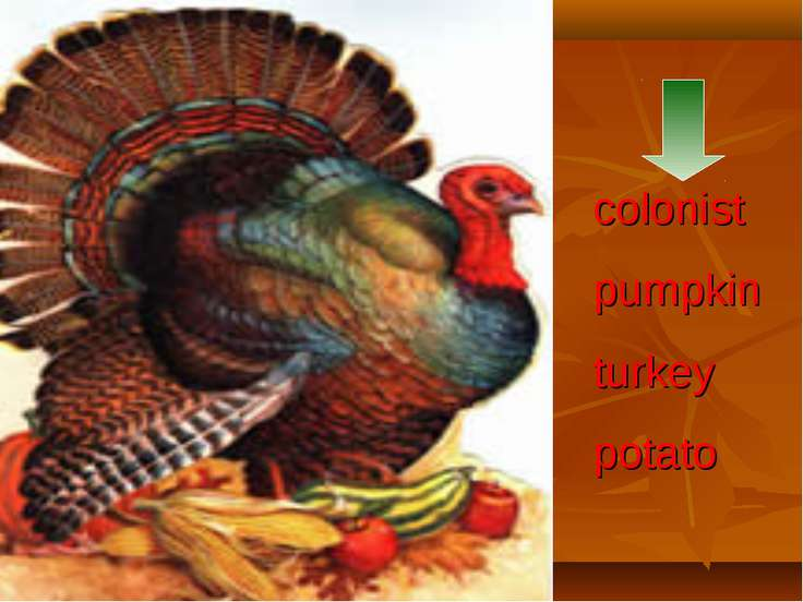colonist pumpkin turkey potato