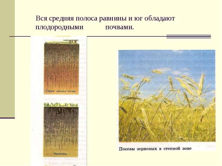 Вся средняя полоса равнины и юг обладают плодородными почвами.