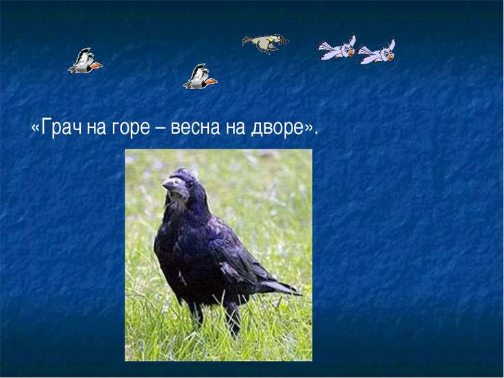 «Грач на горе – весна на дворе».