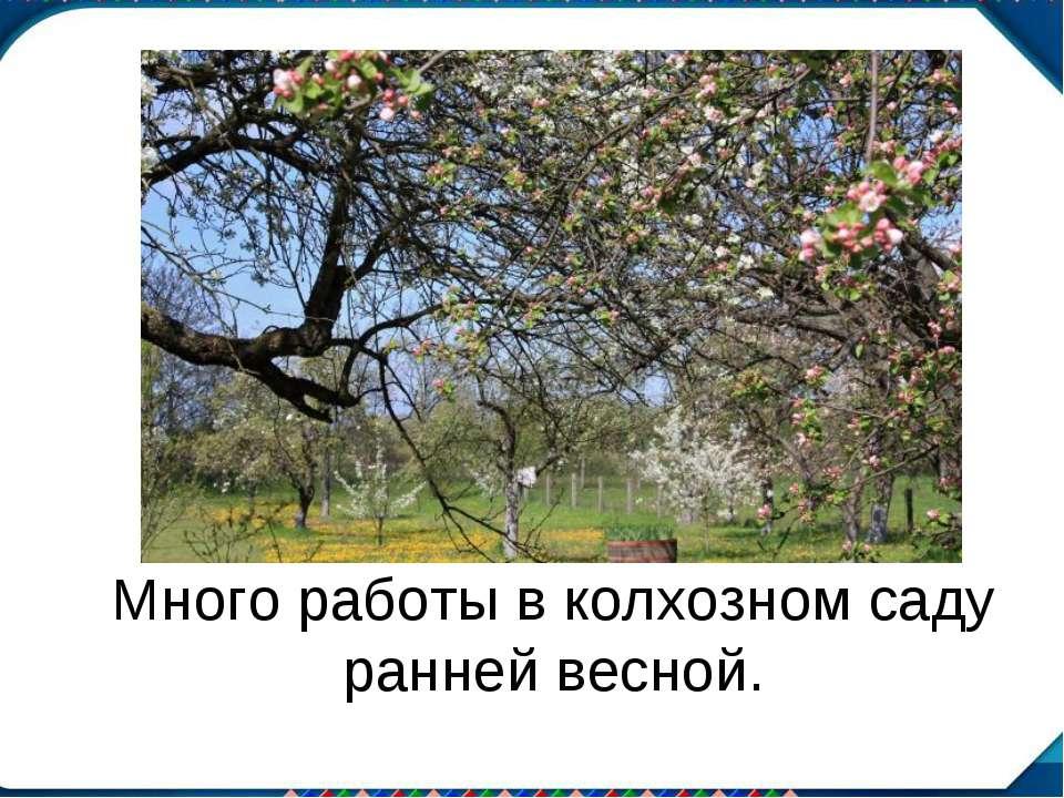 Много работы в колхозном саду ранней весной.