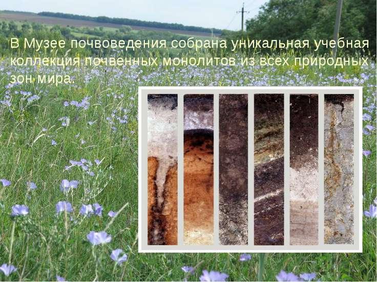 В Музее почвоведения собрана уникальная учебная коллекция почвенных монолитов...