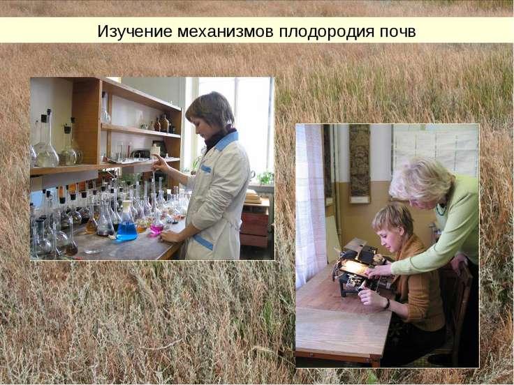 Изучение механизмов плодородия почв