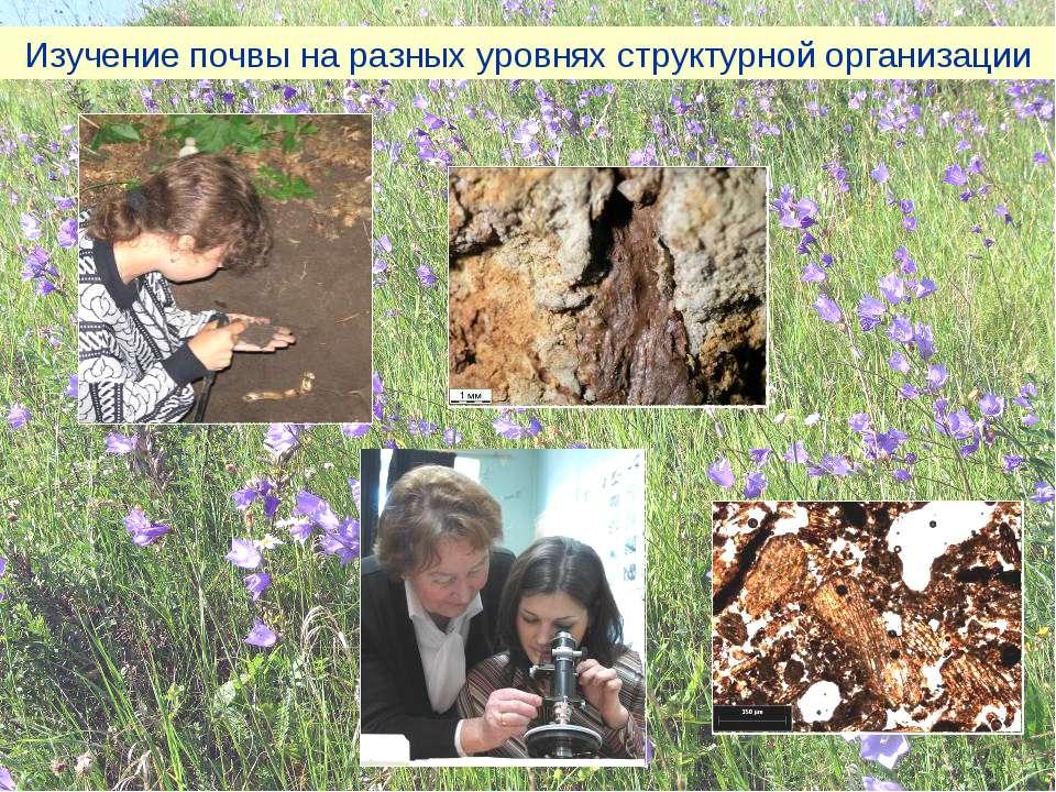Изучение почвы на разных уровнях структурной организации