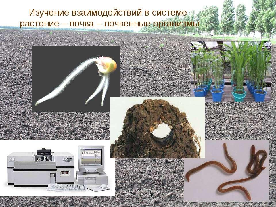 Изучение взаимодействий в системе растение – почва – почвенные организмы