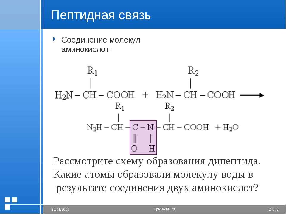 Пептидная связь Соединение молекул аминокислот: Рассмотрите схему образования...