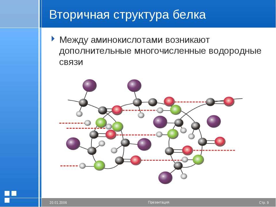 Вторичная структура белка Между аминокислотами возникают дополнительные много...