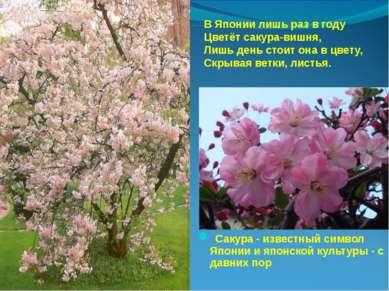В Японии лишь раз в году Цветёт сакура-вишня, Лишь день стоит она в цвету, Ск...